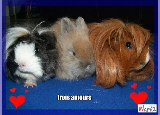 trois amours, lolcats réalisé sur Wamiz