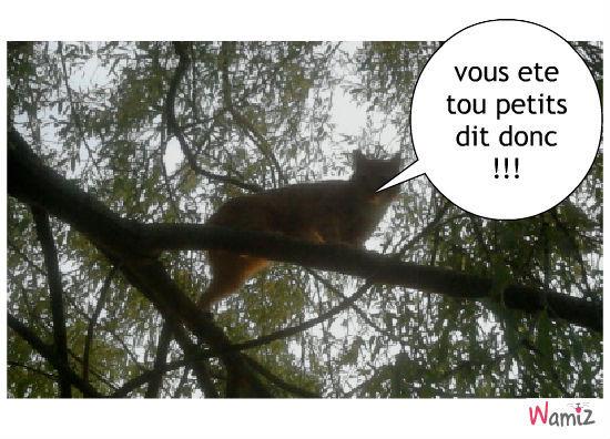 vue d un arbre, lolcats réalisé sur Wamiz