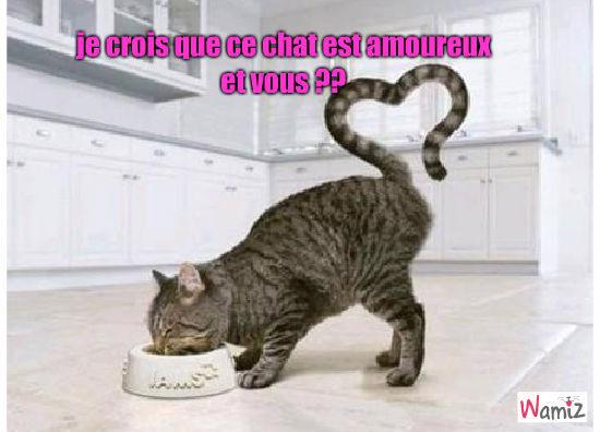 amour version chat, lolcats réalisé sur Wamiz