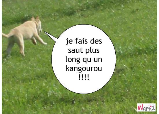 le chien kangourou !!, lolcats réalisé sur Wamiz