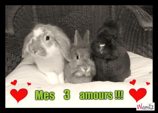 mes amours !!!, lolcats réalisé sur Wamiz