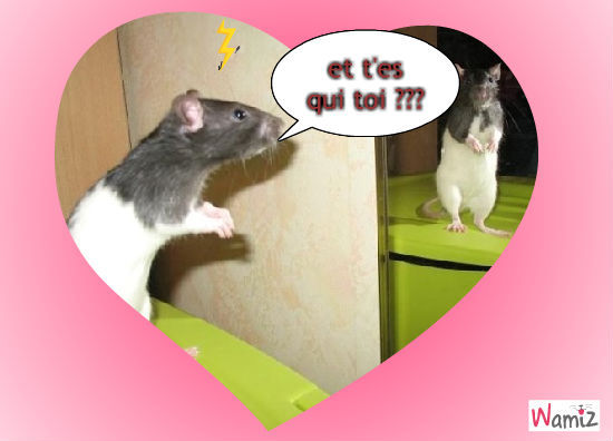 pti rats, lolcats réalisé sur Wamiz