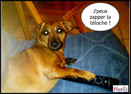 Chipie zappeuse !, lolcats réalisé sur Wamiz