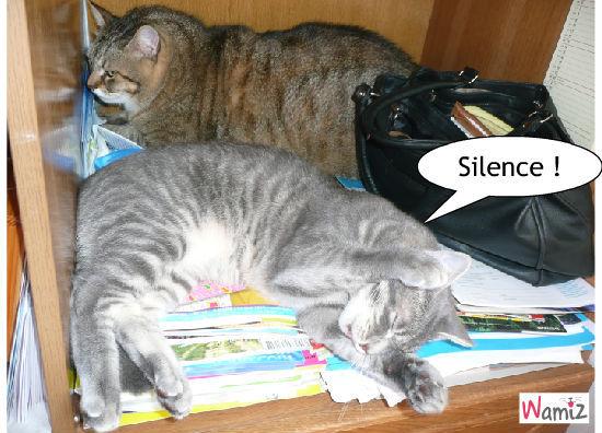Silence on dort, lolcats réalisé sur Wamiz