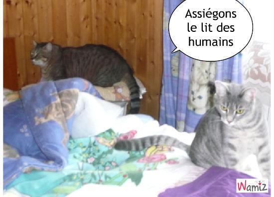 Assiégeons le lit des humains, lolcats réalisé sur Wamiz