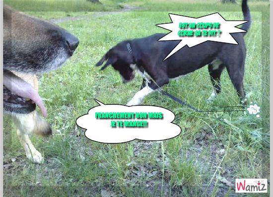 manger un chien , lolcats réalisé sur Wamiz
