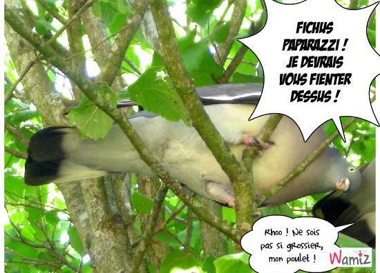 Pigeonnade, lolcats réalisé sur Wamiz
