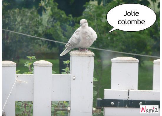 jolie colombe, lolcats réalisé sur Wamiz