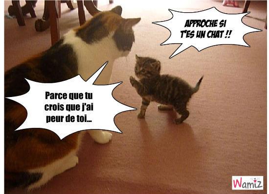 Vien si t'es un chat !, lolcats réalisé sur Wamiz