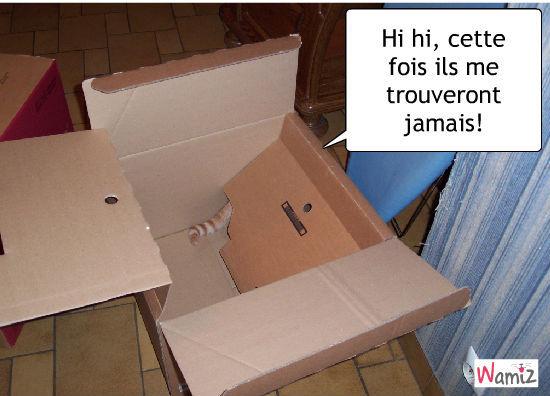 Sully en boîte, lolcats réalisé sur Wamiz
