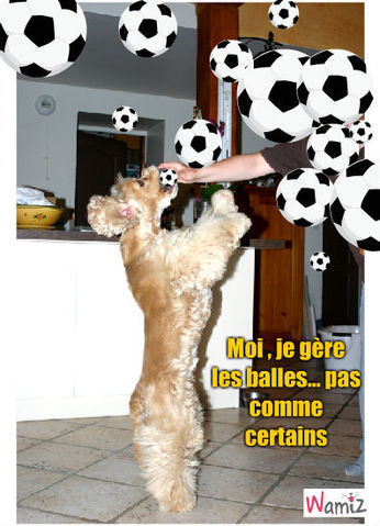 Qui sont les pro du foot??, lolcats réalisé sur Wamiz