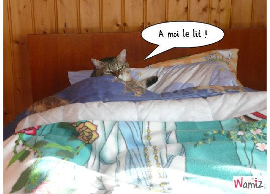 ah moi le lit , lolcats réalisé sur Wamiz