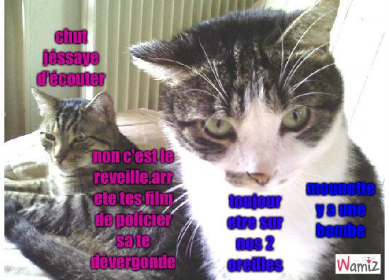 chats, lolcats réalisé sur Wamiz