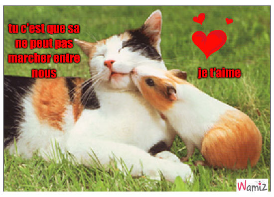 chat et cochon d 'inde, lolcats réalisé sur Wamiz