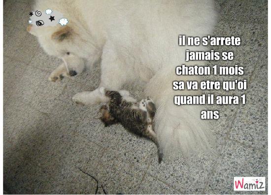 chien et chat, lolcats réalisé sur Wamiz