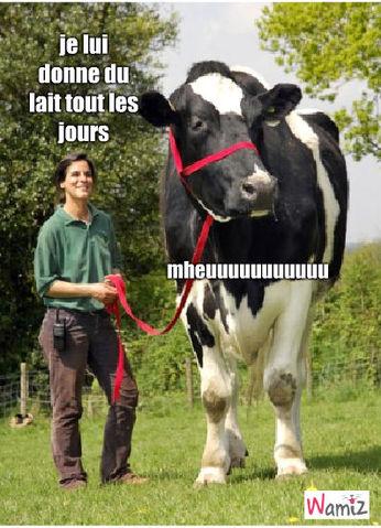 vache, lolcats réalisé sur Wamiz