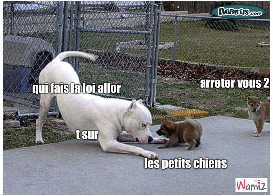 chiens, lolcats réalisé sur Wamiz