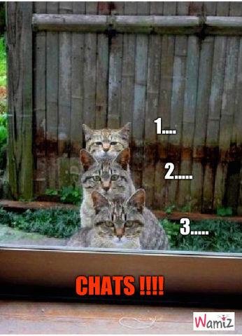 1,2,3... chat!, lolcats réalisé sur Wamiz