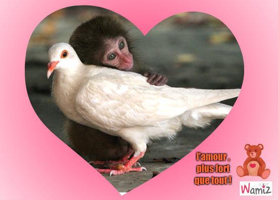 l'amour..., lolcats réalisé sur Wamiz