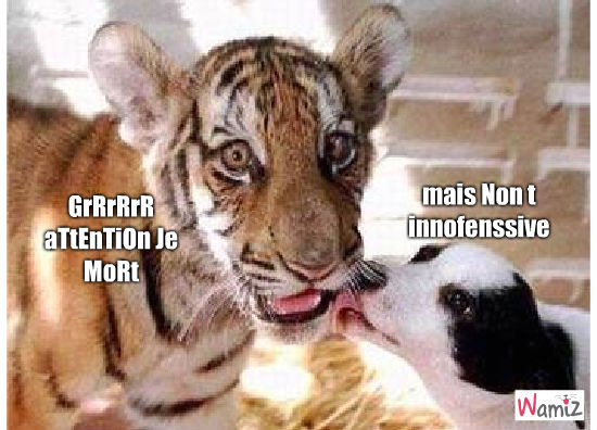 chien et tigre, lolcats réalisé sur Wamiz