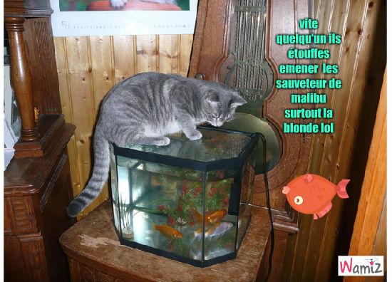 chat poisson, lolcats réalisé sur Wamiz