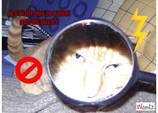 chat loupe, lolcats réalisé sur Wamiz