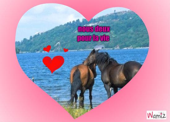 chevaux, lolcats réalisé sur Wamiz