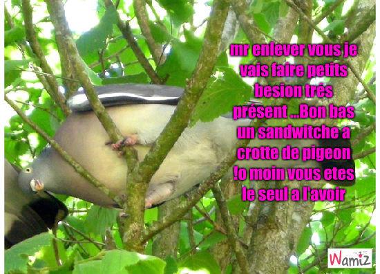 pigeon, lolcats réalisé sur Wamiz