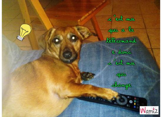 chien, lolcats réalisé sur Wamiz