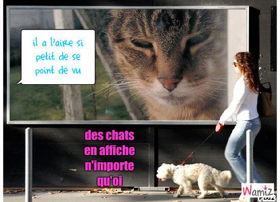 chat et chien, lolcats réalisé sur Wamiz