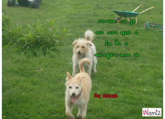 chiens , lolcats réalisé sur Wamiz