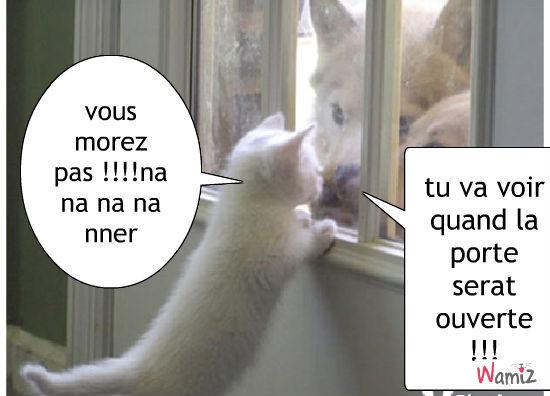 quel vie de chat , lolcats réalisé sur Wamiz