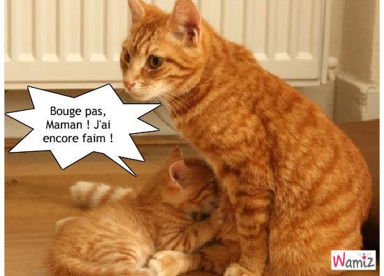 Bouge pas, Maman ! J'ai encore faim !, lolcats réalisé sur Wamiz
