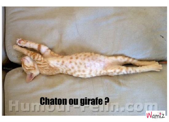 Chaton ou girafe ?, lolcats réalisé sur Wamiz