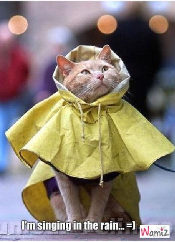 I'm singing in the rain... :), lolcats réalisé sur Wamiz