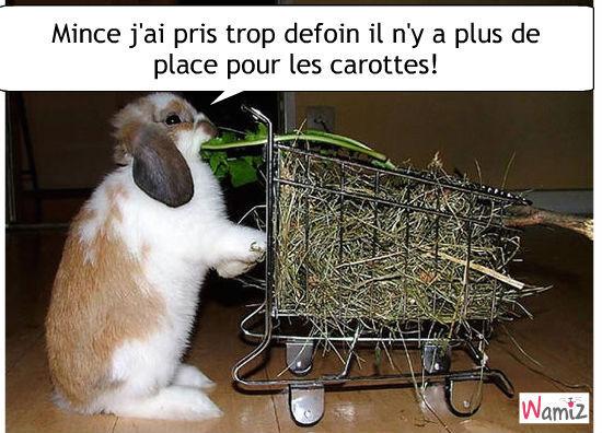 Le marché du lapin, lolcats réalisé sur Wamiz