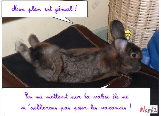 Le lapin voyageur, lolcats réalisé sur Wamiz