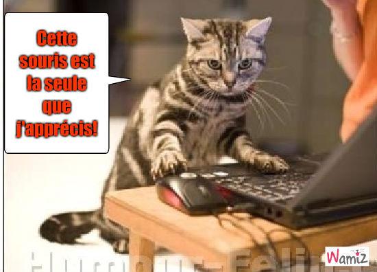 Le chat et la souris, lolcats réalisé sur Wamiz