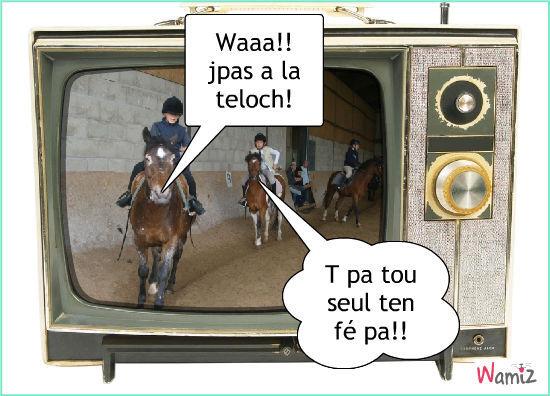 Lé chevaux dingues, lolcats réalisé sur Wamiz