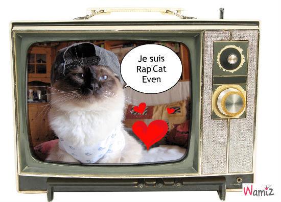 Rap'Cat Even, lolcats réalisé sur Wamiz
