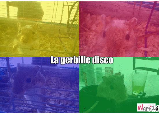 La gerbille disco, lolcats réalisé sur Wamiz