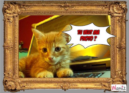 mn chat, lolcats réalisé sur Wamiz