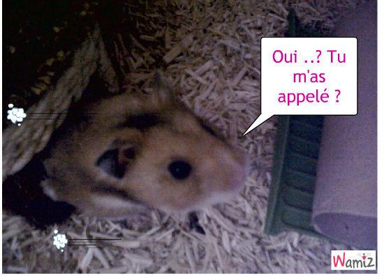 Mon hamster, lolcats réalisé sur Wamiz