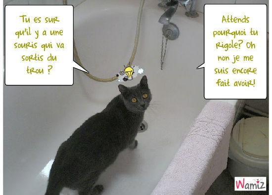 Comment donner un bain à un chat!, lolcats réalisé sur Wamiz