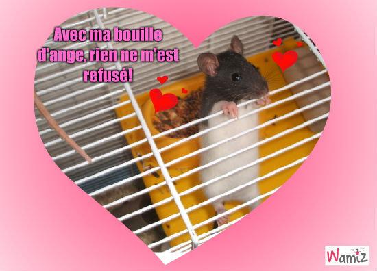 Gueule d'amour, lolcats réalisé sur Wamiz