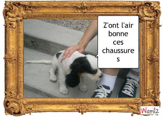 Figaro, lolcats réalisé sur Wamiz