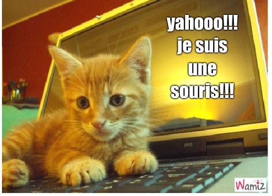 chat ou souris?, lolcats réalisé sur Wamiz