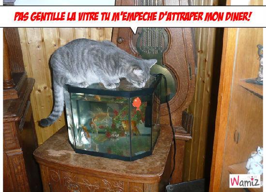 Un chat pêcheur, lolcats réalisé sur Wamiz