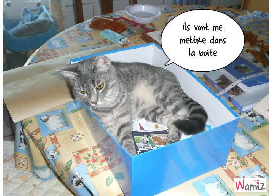 la boîte de grisou, lolcats réalisé sur Wamiz