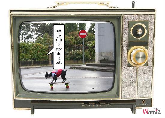 le skate dog, lolcats réalisé sur Wamiz